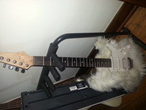 One funky-ass axe.  A modified Ibanez GRX40.  Faux fur, no animals were harmed during the making of this guitar....